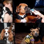 washington humane society bark ball rich kessler photography_008